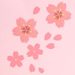 オードブル用お重 舞桜(ピンク)の桜柄